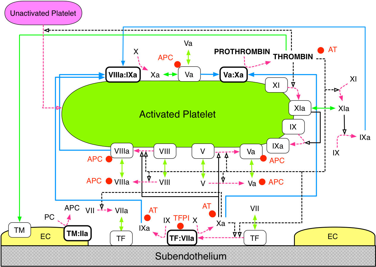 CoagSchematicNoFibrinADPw2